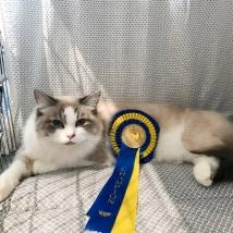 A Champion