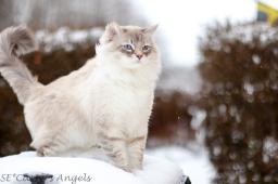 Aslan winter 1