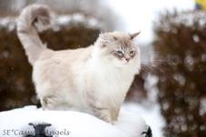 Aslan winter 2