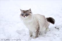 Aslan winter 3