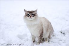 Aslan winter 4