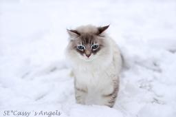 Aslan winter 5