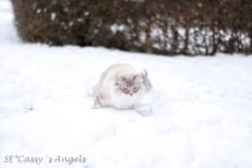 Aslan winter 6