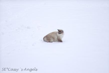 Aslan winter 7