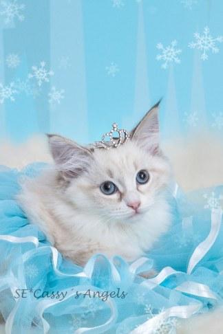 Elsa, 12v